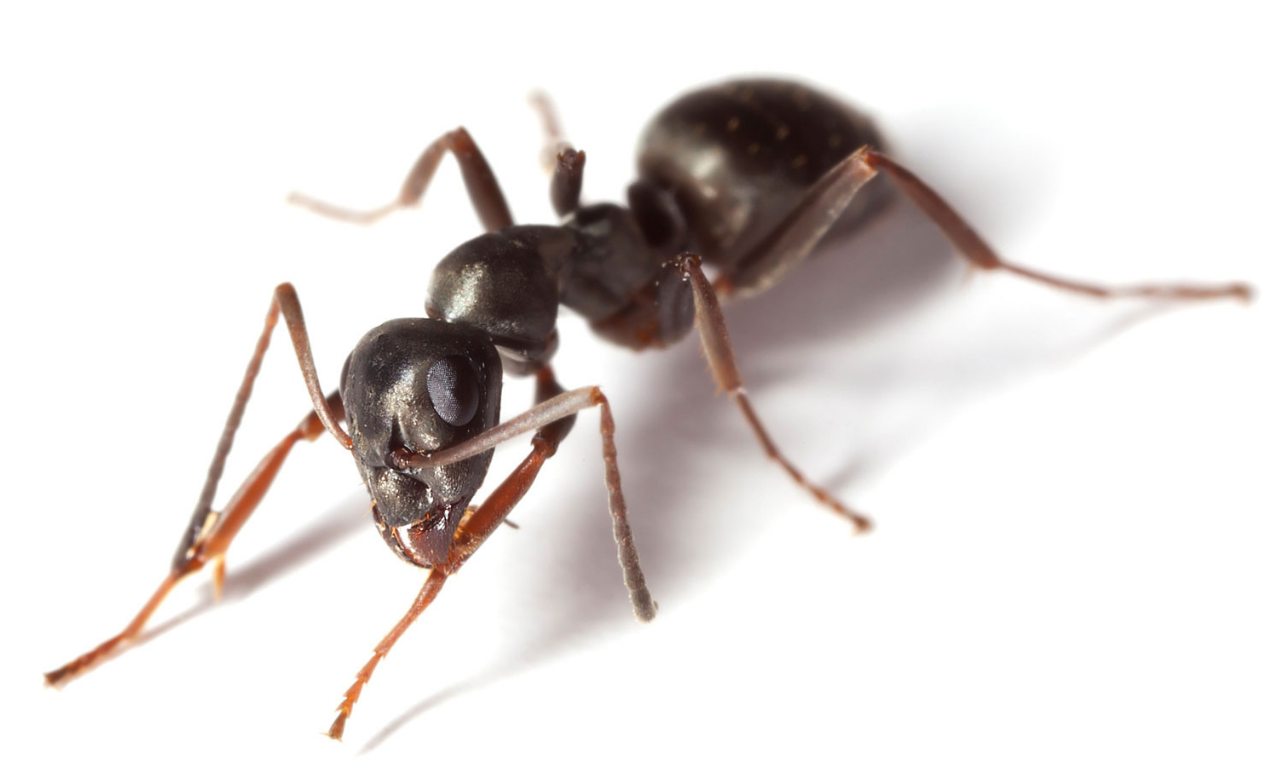 What are the services offered by the ant exterminators?