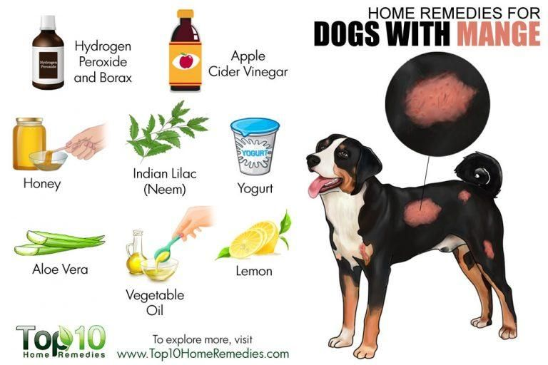 Demodectic Mange In Dogs And Why It's So Common